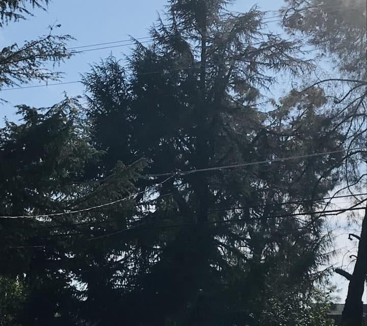Update on man stuck in a tree in Winton