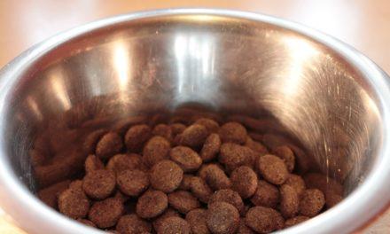 FDA recalls eight brands of dog food