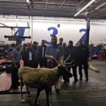 Woman surprises employees with Reindeer at local business in Merced