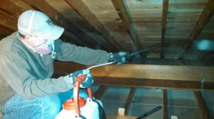 attic cleaning mold treatment - clio