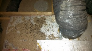 attic damage insulation - clio