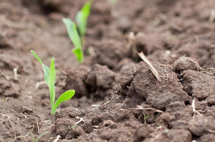 Planting Intentions Nebraska