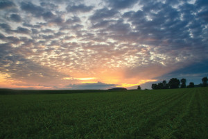 Land Management for Organic Farming in Nebraska