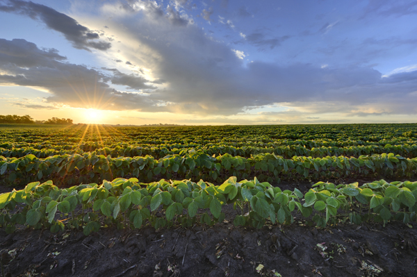 2015 Nebraska Farmland Values