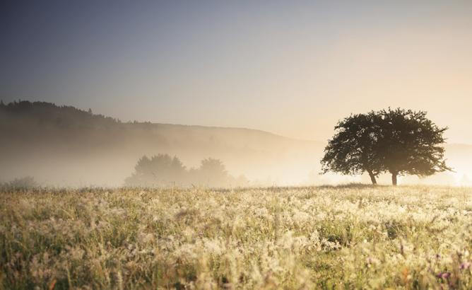 Land Appraisals