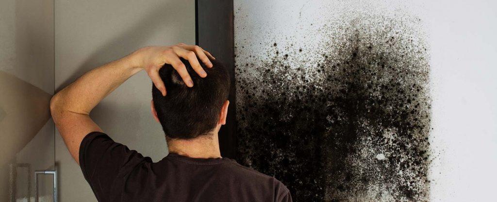 Black Mold Removal Orlando