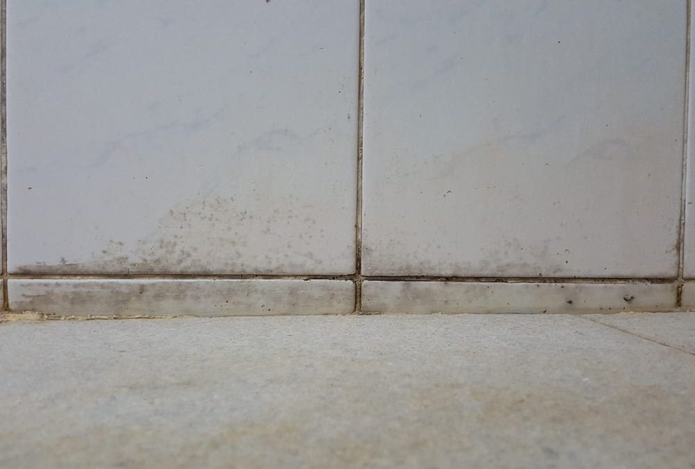 Find out if your Home Has Mold
