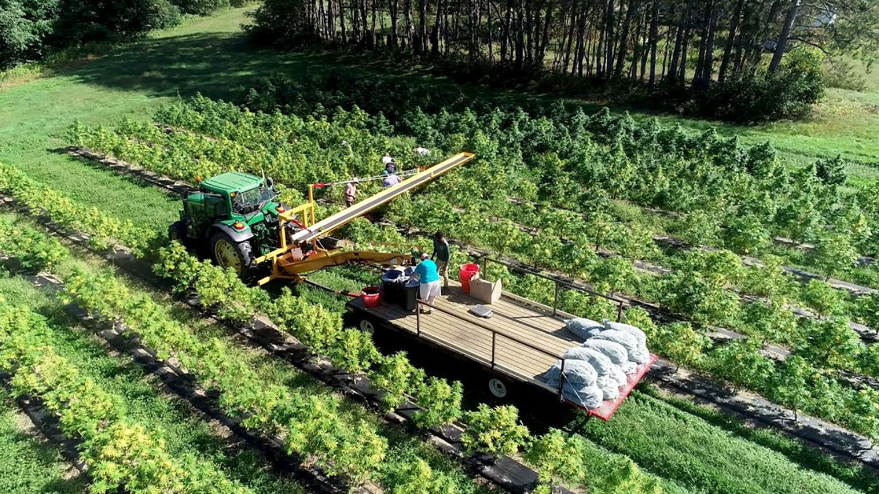 Vermont Hemp Harvest Has Growers Ready to Write Next Chapter