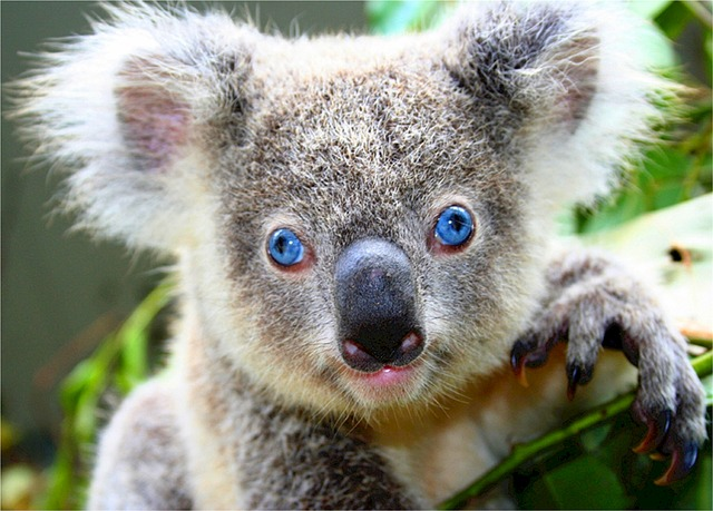 How Eucalyptus Can Offer Us Protection