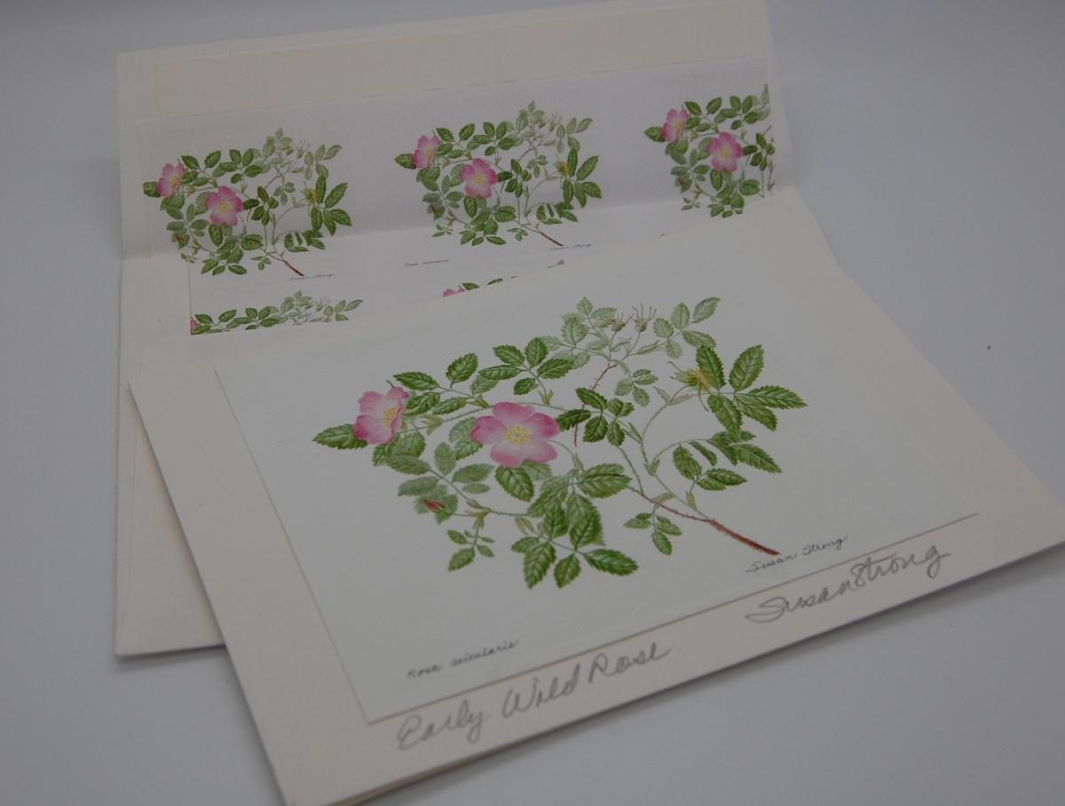 Notecard Early Wild Rose