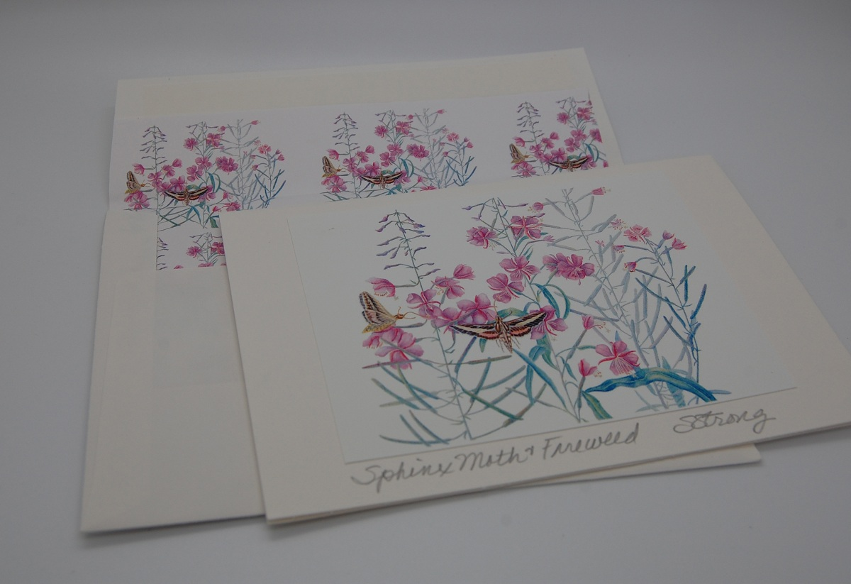 Notecard Sphinx Moth and Fireweed