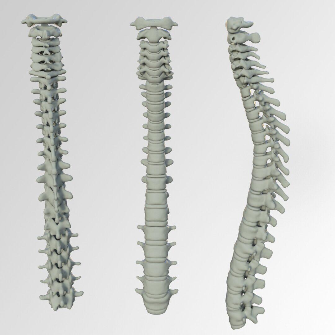 spine-3220105_1920