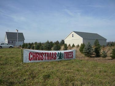 Christmas Tree Sign
