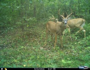 Whitetail Weekly