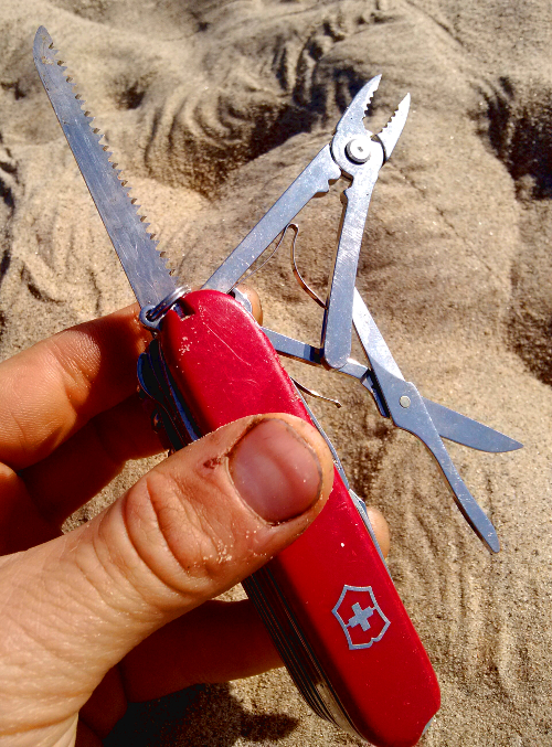 Swisschamp for site