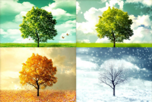 four seasons poster for event with four trees each in a different season