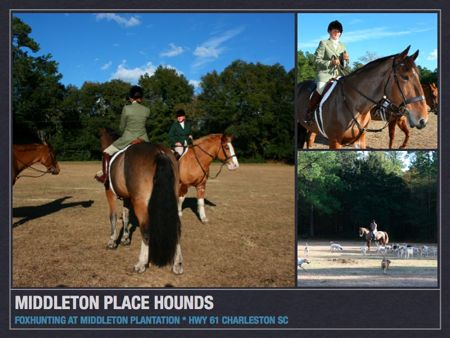 Fox Hunting at Middleton Place Plantation, Charleston Sc