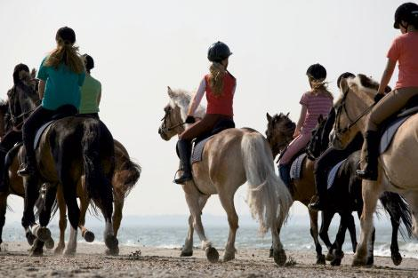Beach rides from Seabrook Island Stables