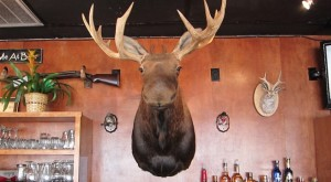 The moose rules!