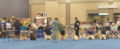 KNOXVILLE CONVENTION CENTER WELCOMES TOP CANINE COMPETITORS  AT 95TH ANNUAL FLUSHING SPANIEL SHOW