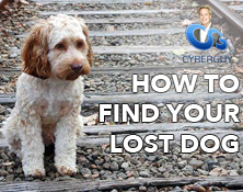 how to find your lost dog Kurt the CyberGuy thumbnail