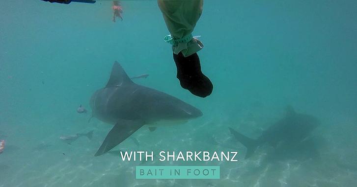 5 Ways to Repel a Shark Attack - Sharkbanz