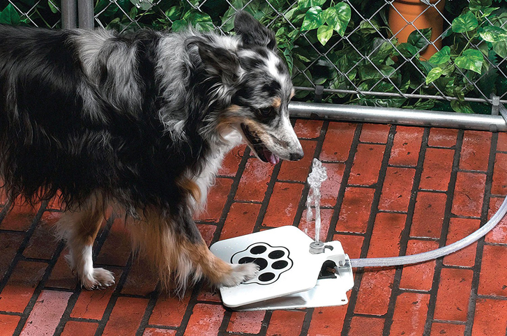 5 Ways to Keep Dogs Safe and Cool in Hot Weather: Outdoor Dog Water Fountain