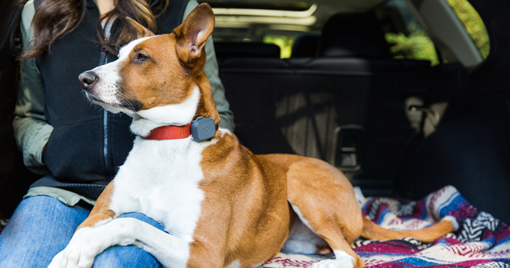 5 Ways to Keep Your Dogs Safe and Cool in Hot Weather: Whistle Dog GPS Tracker