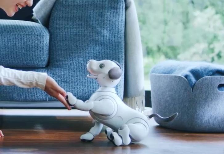 aibo Robot Companion