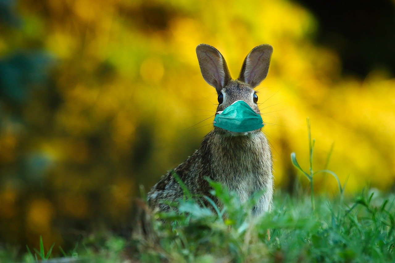 How To Celebrate Easter Online CyberGuy