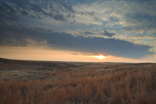 In the rough terrace of the Western Oklahoma live Lesser Prairie Chicken