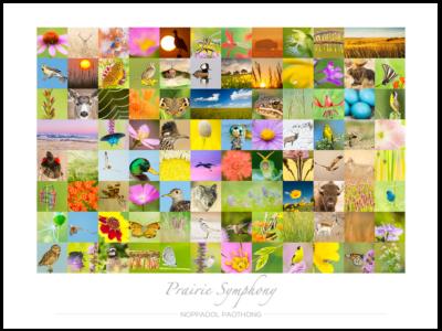 Prairie Symphony Poster