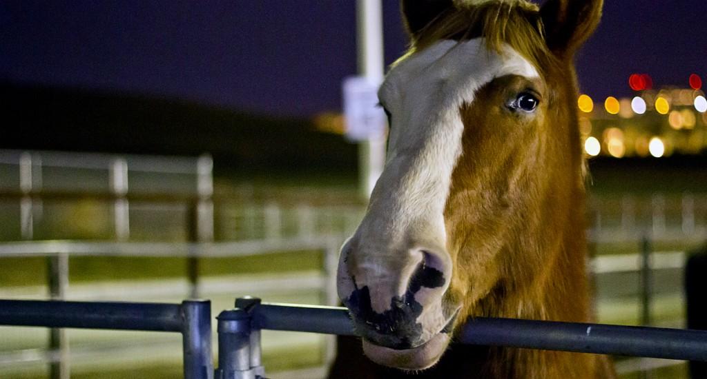 Pierce college Horse inside a stable.Photo: Jose Romero