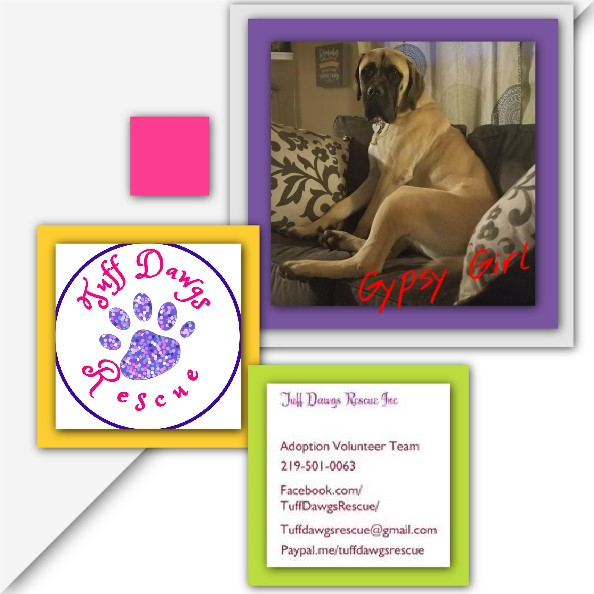 Gypsy Girl – ADOPTED