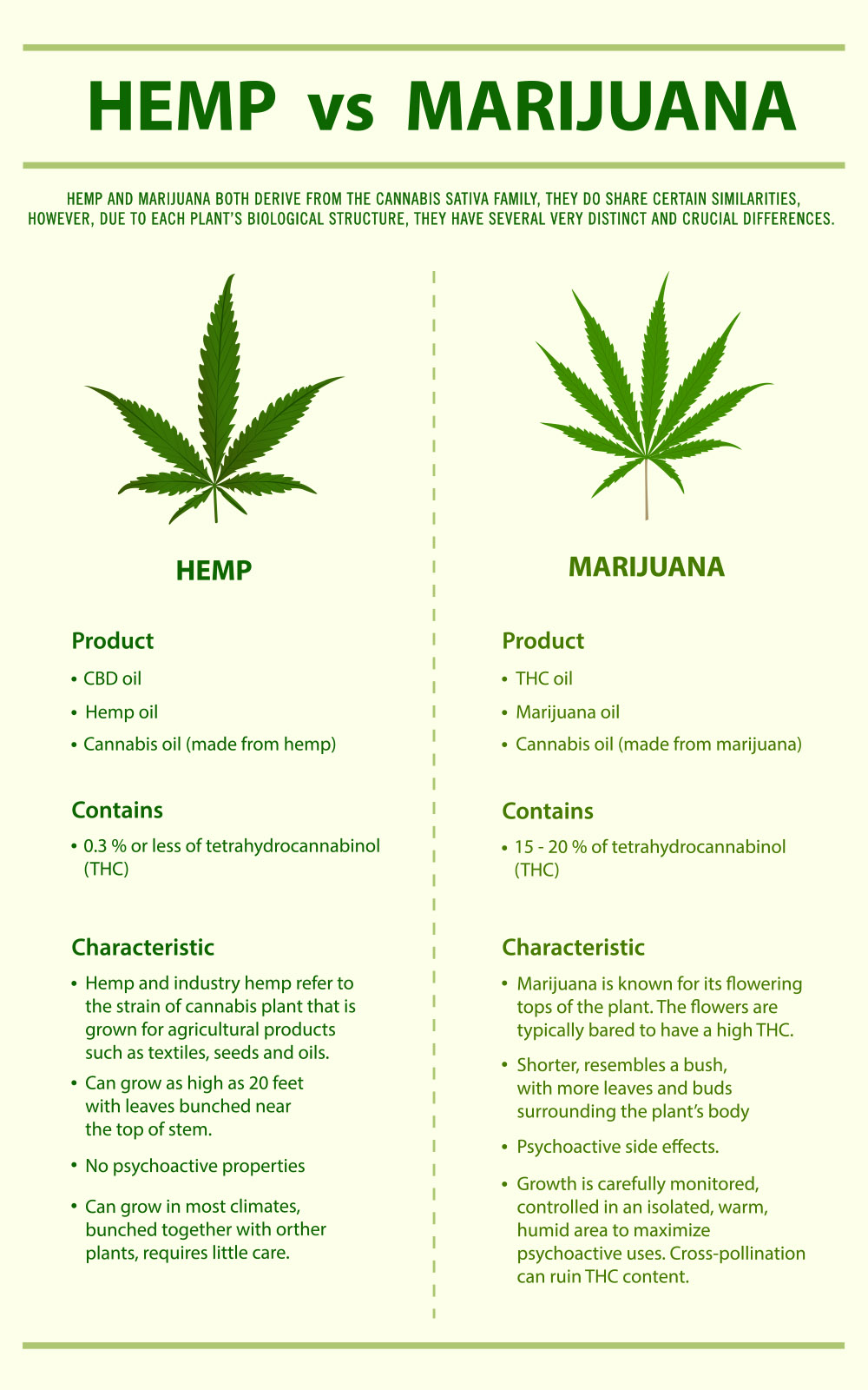 Hemp vs Marijuana vertical infographic, healthcare and medical illustration about cannabis