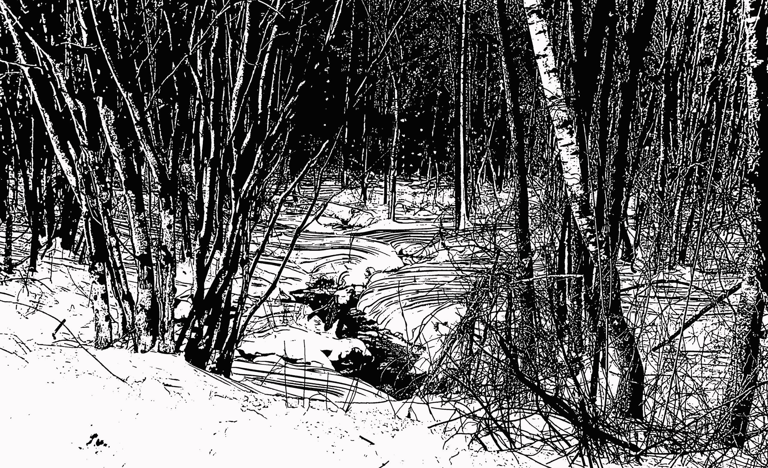 Brook in Snowy Woods