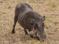 Sandavy Safaris
