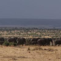 Kenya Elephant Herd