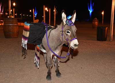beer burro burrough donkey
