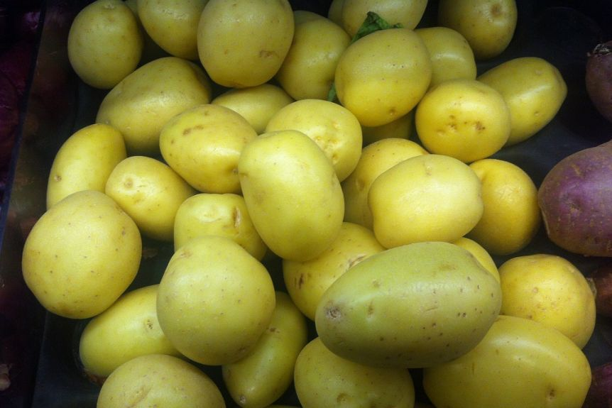 Green Potato: how much toxic for human