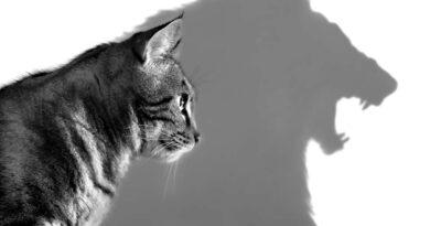Pelajari bahasa tubuh kucing anda