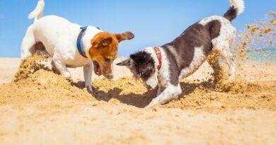 Kenapa anjing kerap gali tanah dan menguburkan benda dalam tanah?