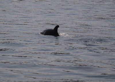 Dolphin Nature Tour