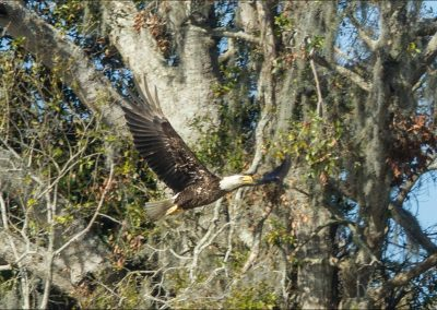 Eagle on Birding Tour