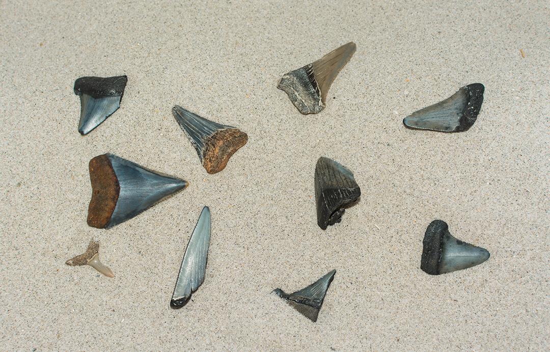 shark-teeth