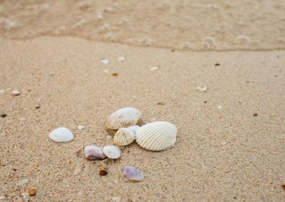 shells-and-more