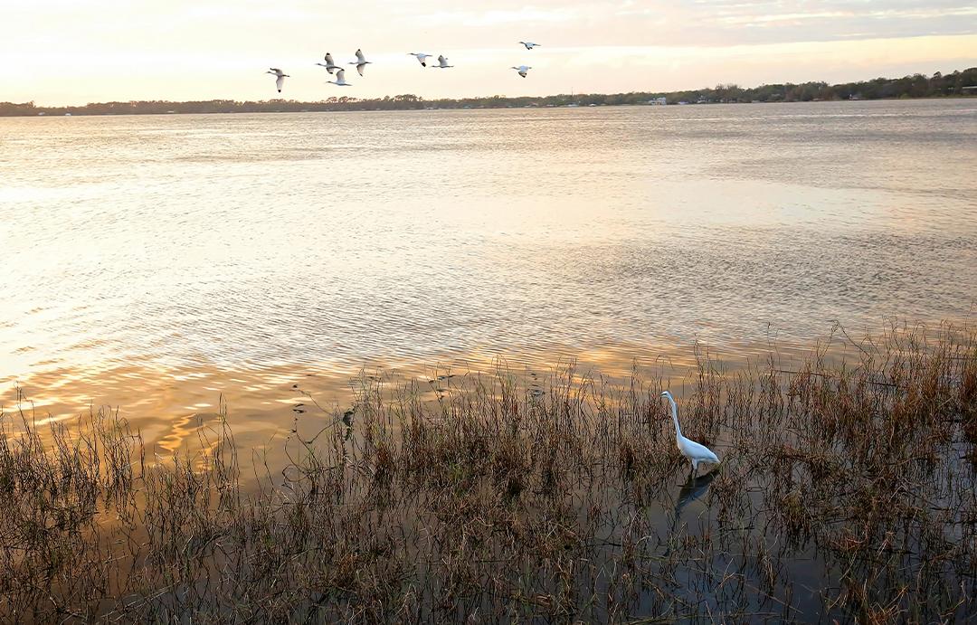 sunset-cruise-birds