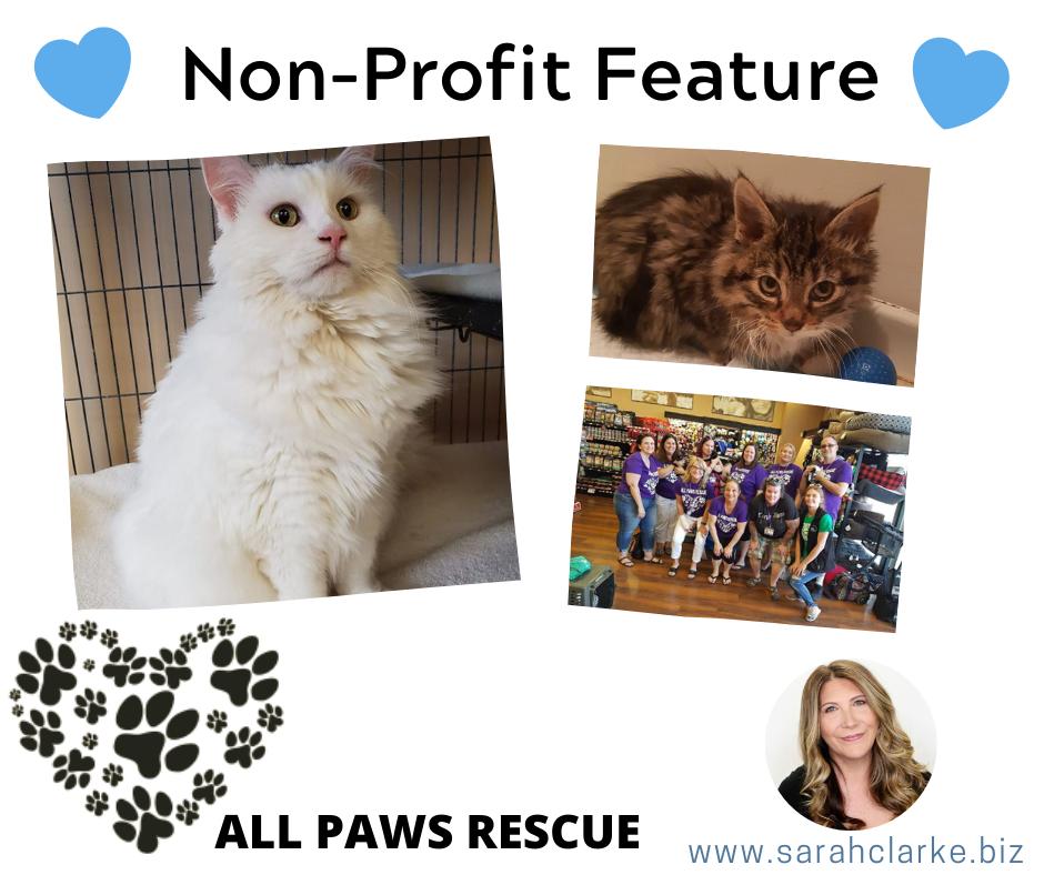 Non profit feature All Paws Rescue Cat Rescue Toronto