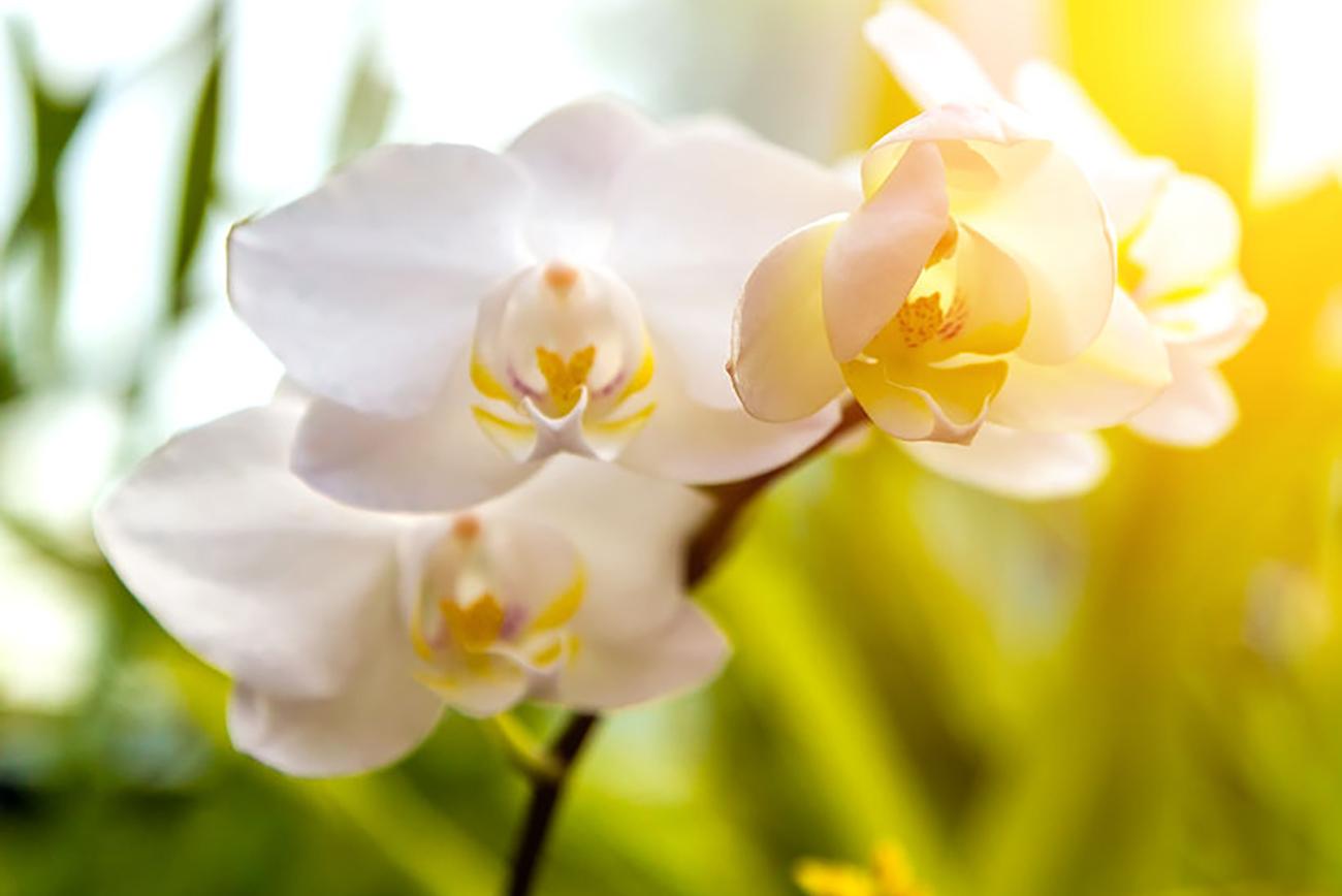 Orchid PHILANTHROPY