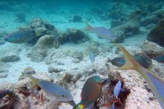 Fish in abundance